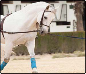Training/Lunging Accessories