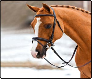 Bridles and Leatherwear