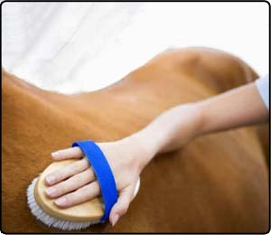 Grooming and Tack Care